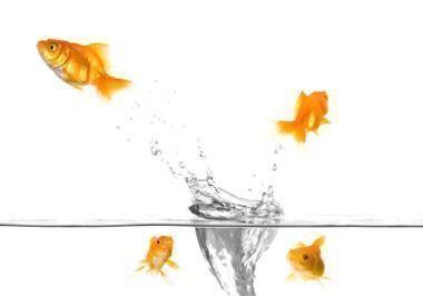 springende-fische